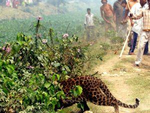India, bimba di 3 anni gioca con la mamma: leopardo la abbra
