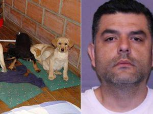Cuccioli di cane imbottiti di droga per passare la frontiera    veterinario condannato