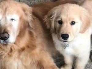 Uno è cieco, l'altro è la sua guida: i due cani diventano st