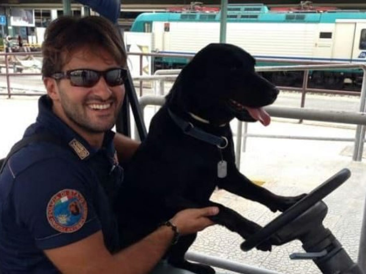 Lultimo Addio Della Polizia A Gino Il Cane Poliziotto Portato Via