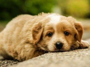 Non porta il cane dal veterinario, condannato a pagare una m