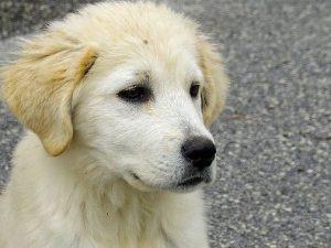 Biella, cucciolo di sei mesi ucciso a bastonate nel giardino