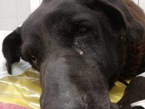 Cane anziano e malato chiuso in un sacco e gettato nella spa
