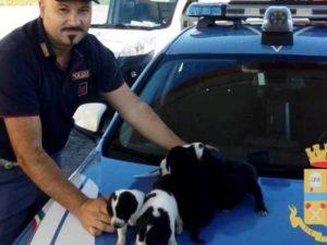Pescara, cagnolini abbandonati in superstrada seminano il pa