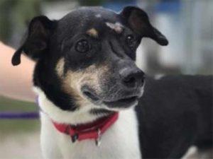 Zippy, il cagnolino morto da eroe: si è sacrificato per salv