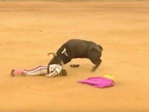 Spagna, toro lo incorna durante la Corrida e gli recide due arterie: ...