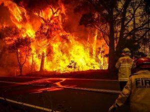 Australia, gli incendi hanno distrutto un quinto delle fores