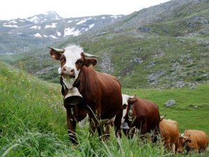 Unesco: transumanza e alpinismo tra i beni immateriali dell'