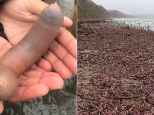 Sulle spiagge della California c'è un'invasione di migliaia