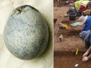 Archeologi trovano 4 rarissime uova di gallina di epoca roma