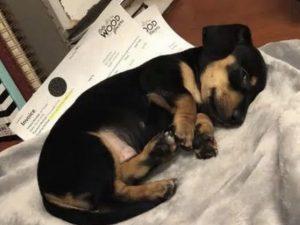 Tragico errore dal veterinario, confondono numeri e nomi: so