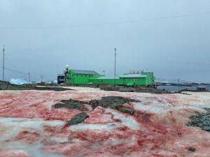 Antartide, la neve diventa rossa come il sangue. E peggiora