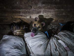 La Cina potrebbe presto vietare consumo della carne di cane