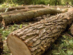 Bolzano |  dramma nel bosco |  17enne travolto da un tronco |  è in condizioni disperate