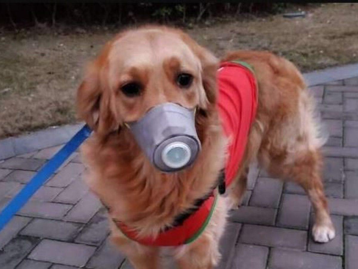 Domande Al Veterinario Cane coronavirus, le rassicurazioni dell'oms: un solo cane