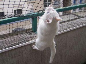 Appende il gatto al balcone di casa, 26enne denunciato per maltrattamenti di animali