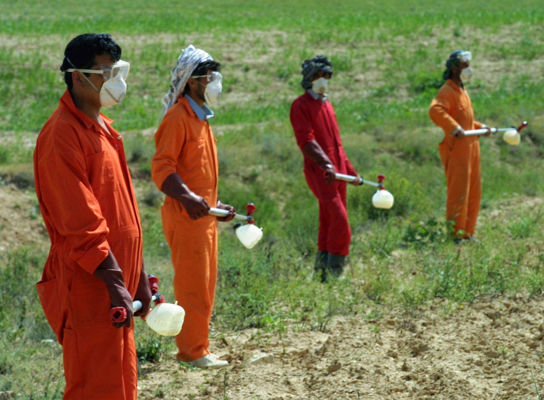 Cina, bimbo positivo al bacillo della peste bubbonica: stato d ...