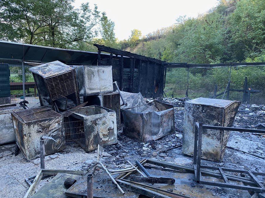 Bologna, incendio devasta oasi felina: è strage di gatti, muoiono bruciati vivi