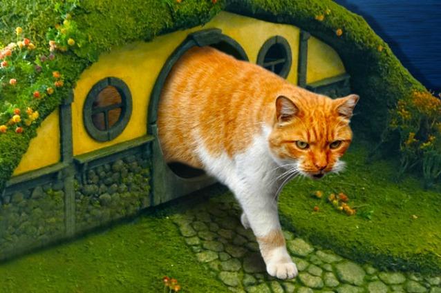 Il signore degli anelli per animali domestici accessori - Cucina casalinga per gatti ...