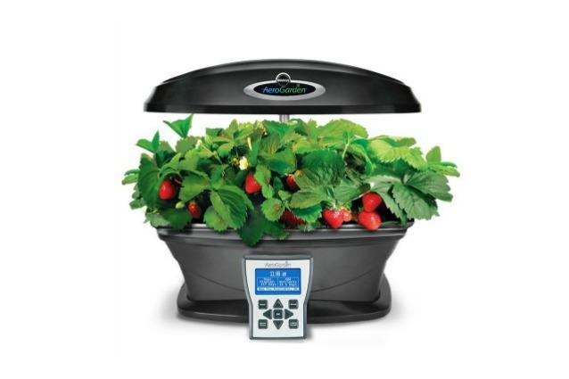 Aerogarden come creare il proprio orto in casa - Come coltivare il basilico in casa ...
