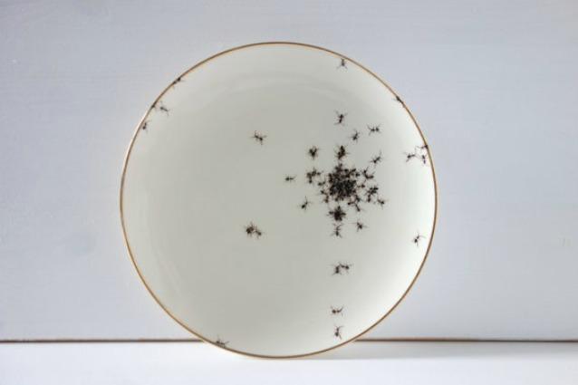 Disgusto a tavola ecco i piatti con le formiche per ospiti indesiderati - Invasione di formiche in cucina ...