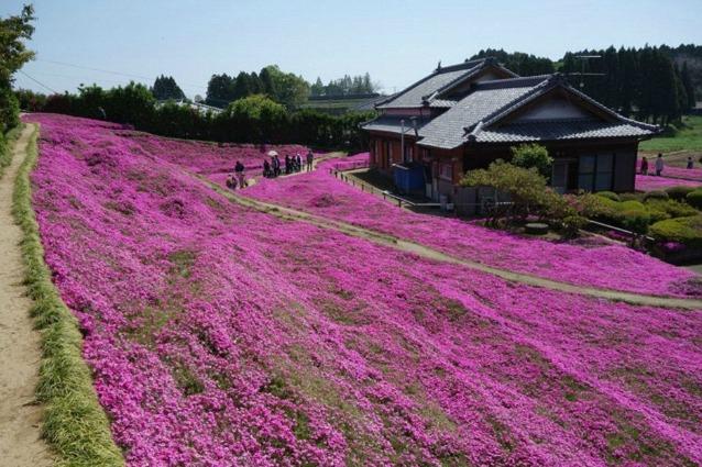 È il giardino più romantico al mondo e quando ne leggerete la storia capirete il perché