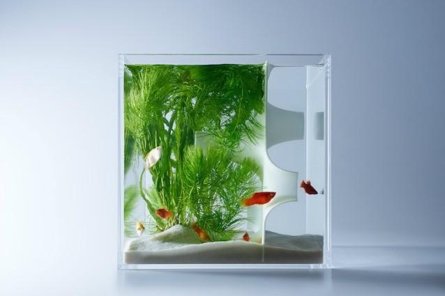 Ecco gli acquari pi strani che abbiate mai visto for Acquari moderni