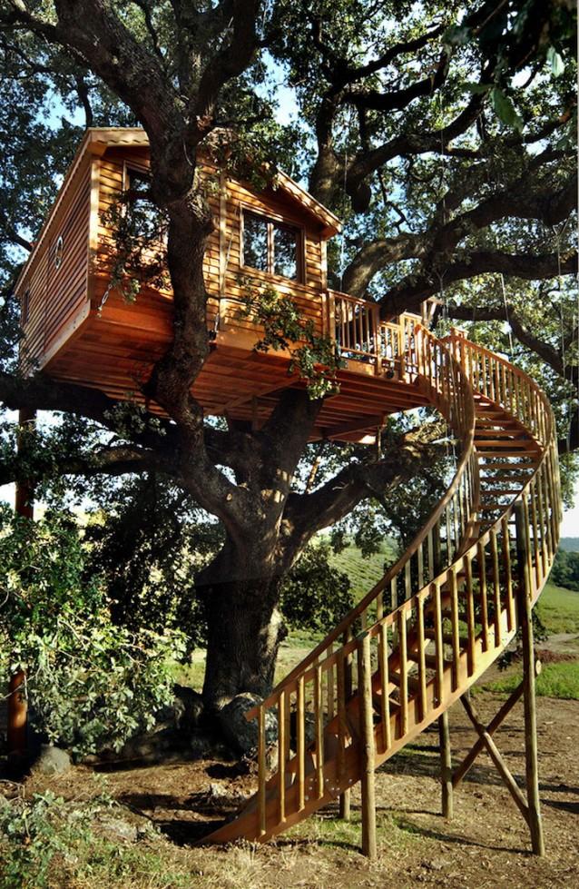 Immersa nei campi di lavanda: ecco la casa sull\'albero più bella d ...