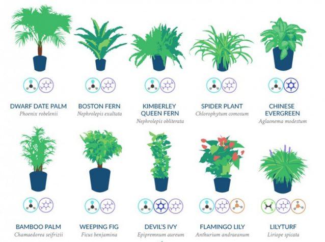 Quali sono le migliori piante per purificare l 39 aria di - Piante da interno purifica aria ...