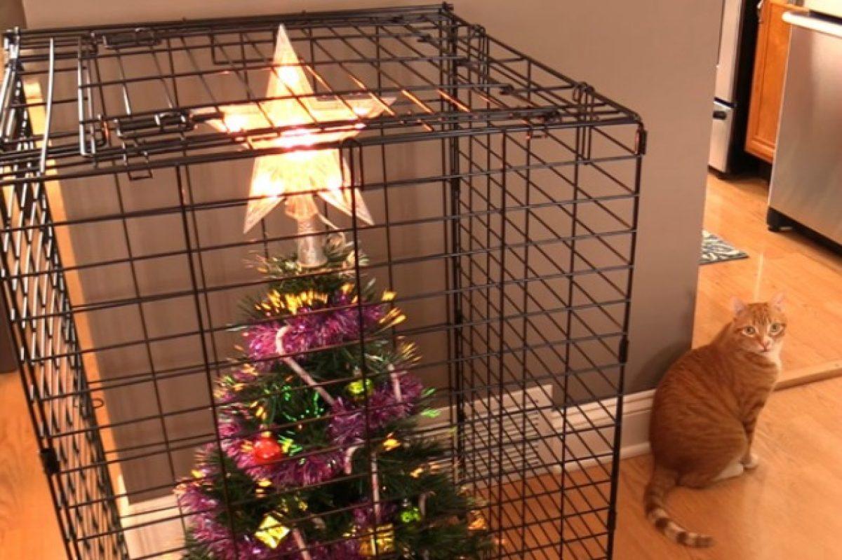 Albero Di Natale E Gatto Come Fare.Alberi Di Natale Anti Gatto Le Idee Piu Geniali Per Evitare La Distruzione Degli Addobbi