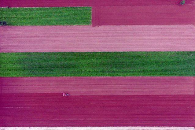 Nei campi di riso della Cina che sembrano opere d'arte