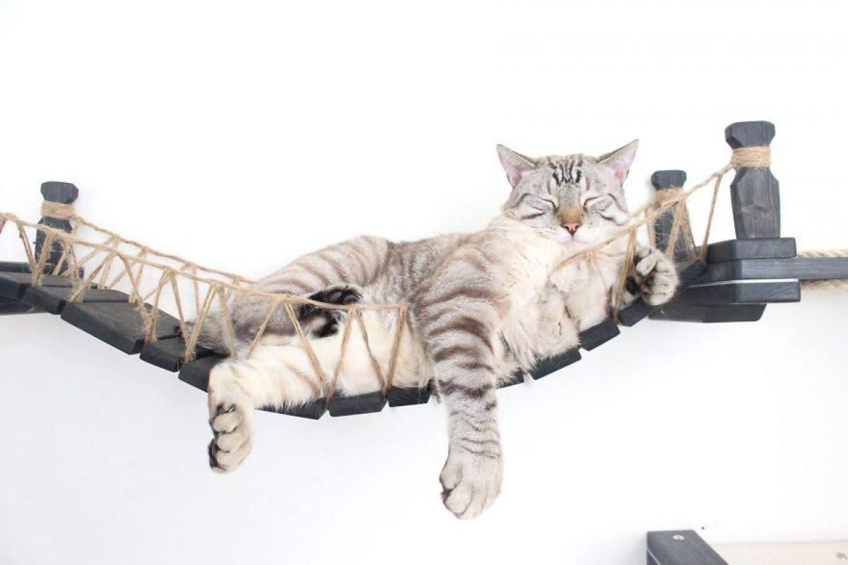 Mobili Per Gatti Fai Da Te : Mobili per gatti il ponte di indiana jones per felini avventurosi