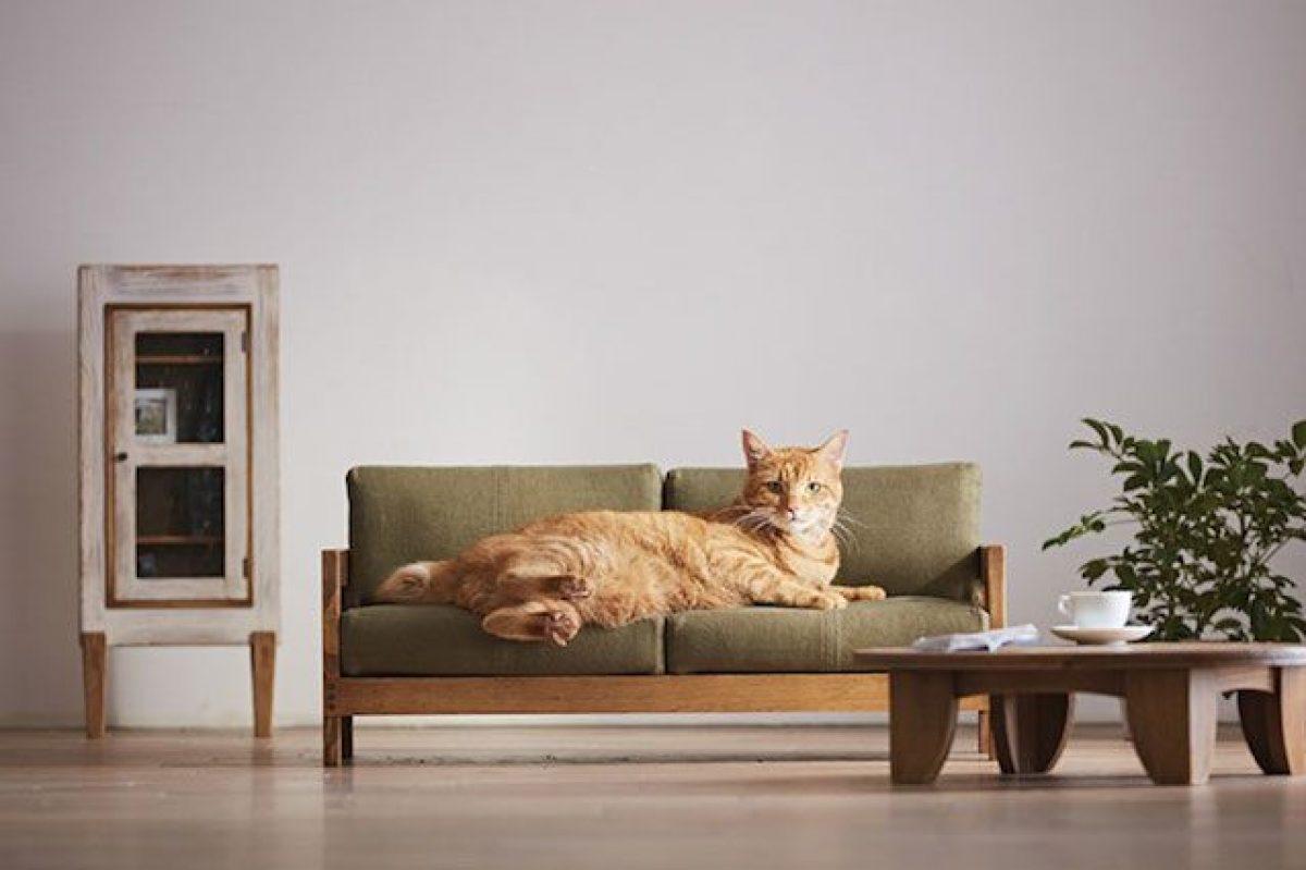 Mobili Per Gatti Ikea : L azienda concorrente di ikea in giappone lancia la sua linea di