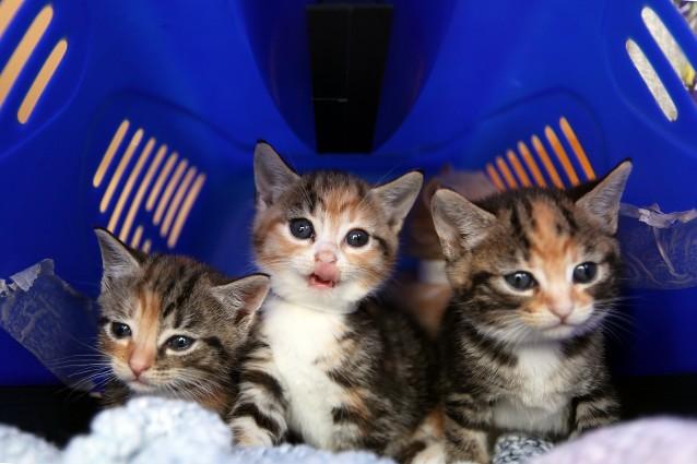 Ecco perché i gatti amano nascondersi nelle scatole