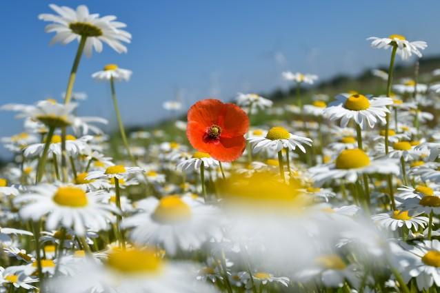 Oroscopo: un fiore per ogni segno zodiacale (FOTO)
