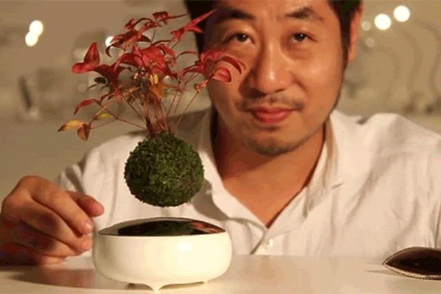 Arriva l 39 air bonsai la pianta che riesce a volare video for Bonsai comprare