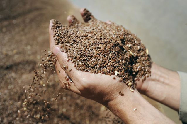 Semi di lino: proprietà benefiche che aiutano a depurare l'intestino