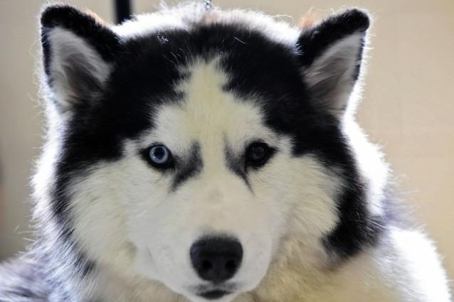 Oroscopo: un cane per ogni segno zodiacale