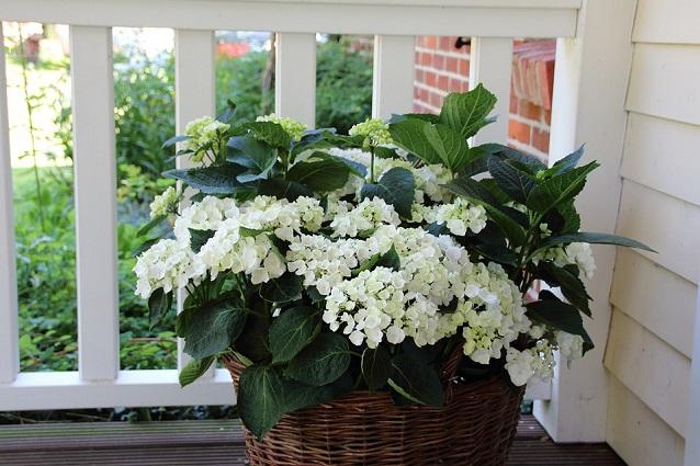 Piante perenni come scegliere quelle pi adatte a balconi for Piante da esterno in vaso perenni