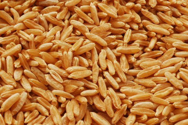 Kamut: proprietà e benefici del grano Khorasan