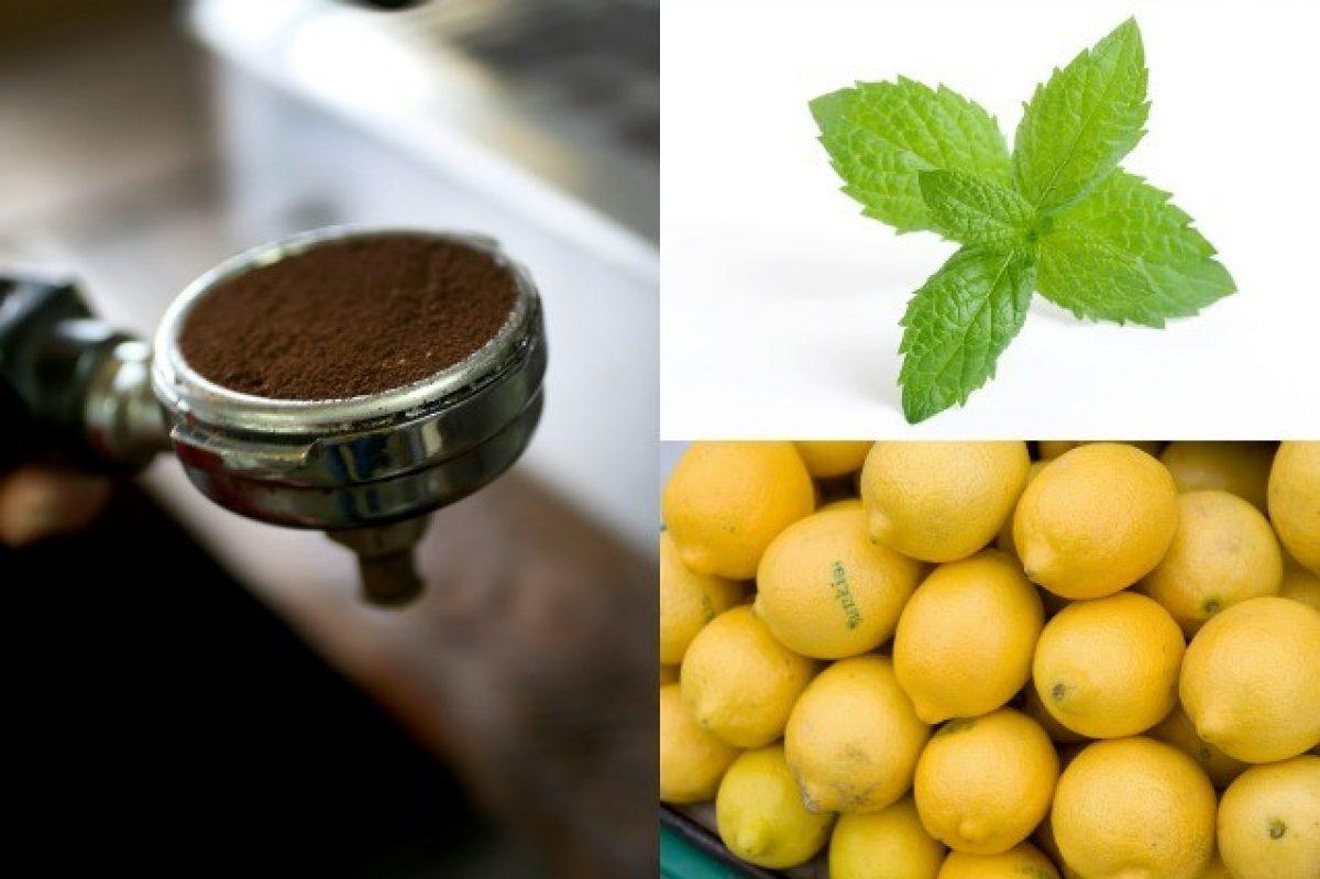 Repellente Naturale Per Vespe come tenere lontani gli insetti con i rimedi naturali