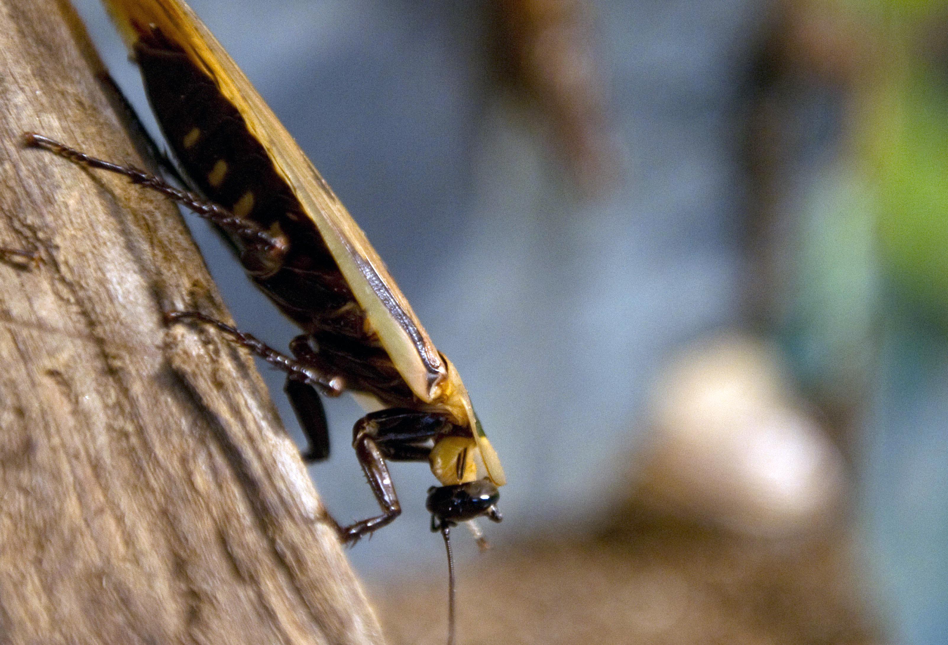 Piccoli Scarafaggi In Cucina i rimedi naturali per eliminare gli scarafaggi