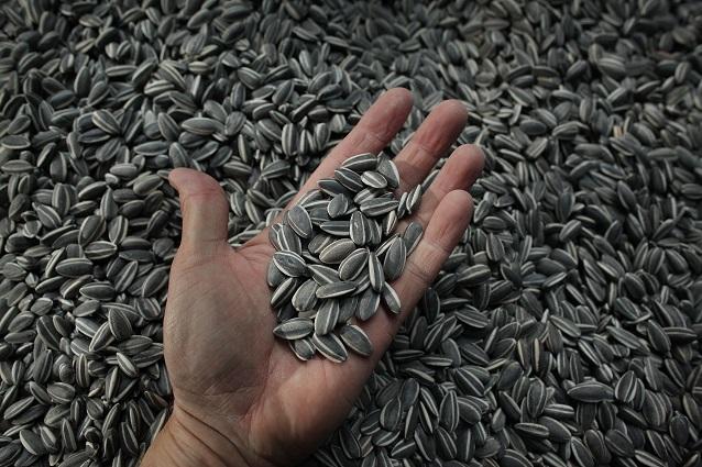 Semi di girasole: proprietà, come usarli e controindicazioni