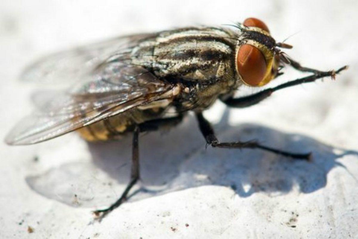 Troppe Mosche In Giardino 15 rimedi naturali per allontanare le mosche