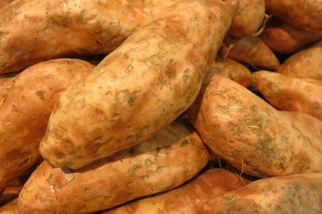 La Patata Dolce (Ipomoea Batatas) O Patata Americana è Una Radice Tuberosa  Originaria Del Sud America Ma Che Ha Trovato Ampia Diffusione Anche In  Italia, ...