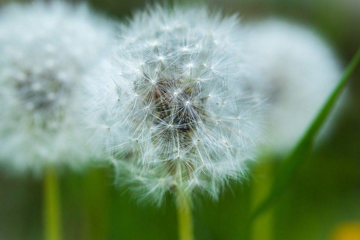 Allergia Rimedi Della Nonna allergie stagionali: i rimedi e i consigli utili per