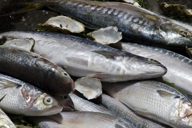 Pesce azzurro: proprietà, specie e come consumarlo