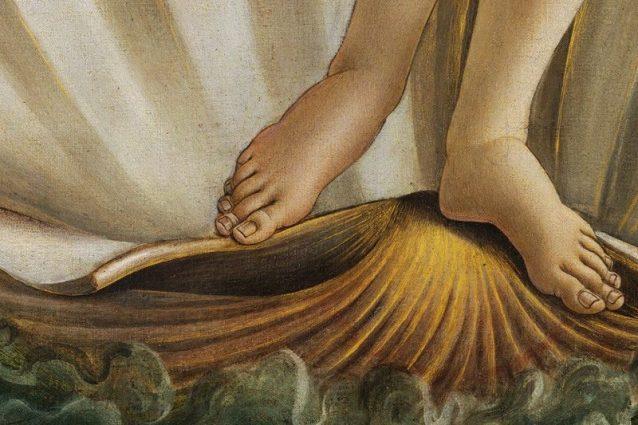 Piede di Venere: ecco che cos'è