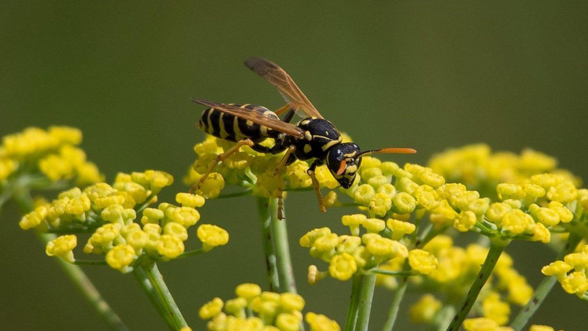 Troppe Mosche In Giardino come allontanare api, vespe e calabroni: rimedi e consigli