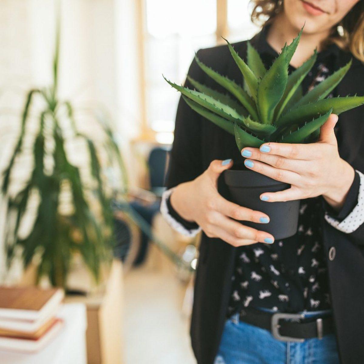 Pianta Da Ufficio Poca Luce piante grasse in casa: tutti i benefici per la salute